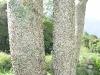 Apamate detalle del tronco