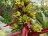 Bromelia aquilega flor