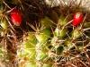 Buchito flor