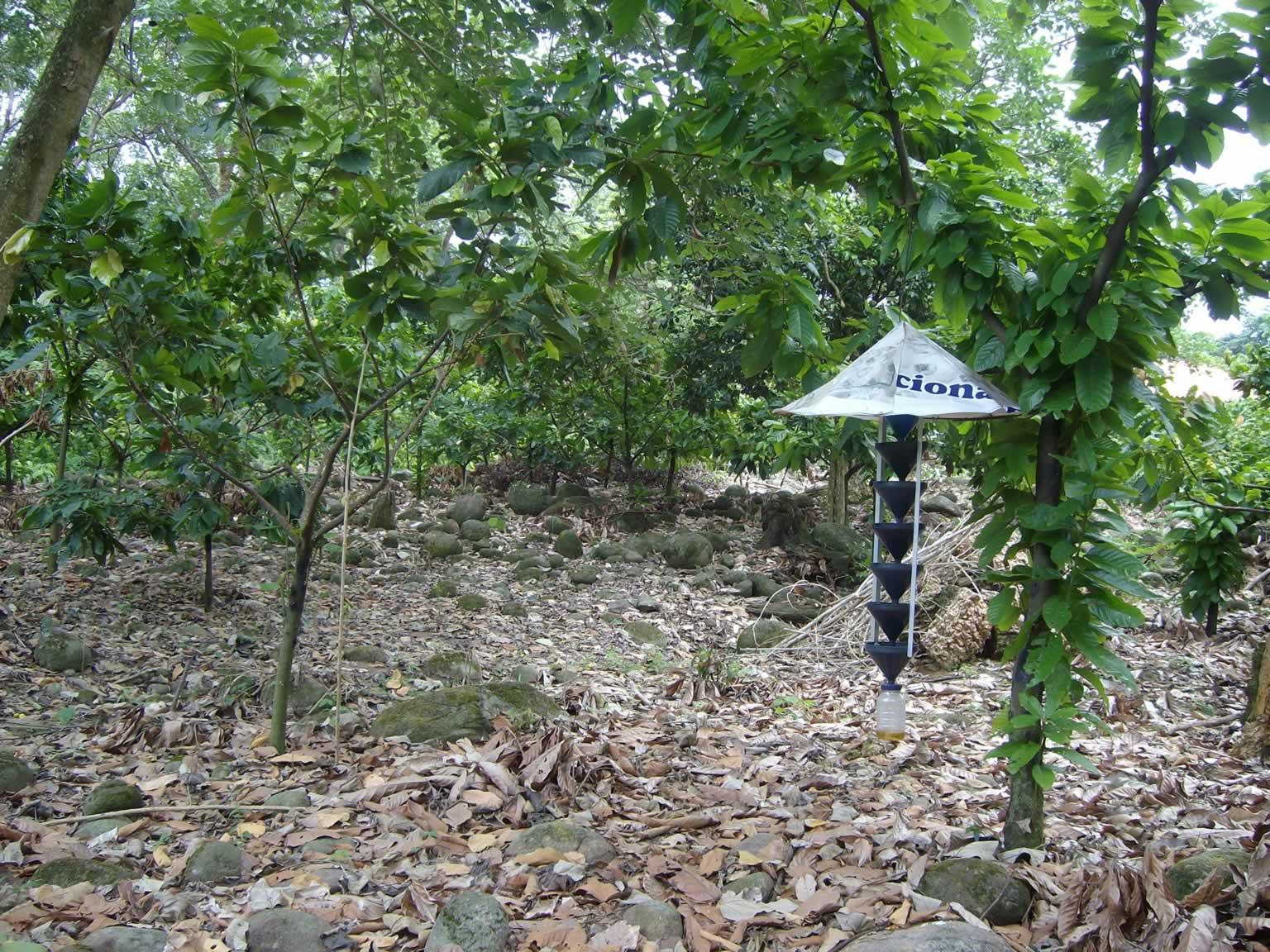 Index of jardin botanico wp content gallery proyecto for Jardin ula ula