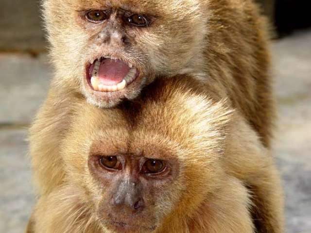 T500200003685-0-capuchino1b